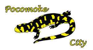 pocomoke-city-salamanders
